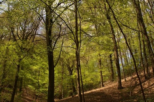 Le bois de la vecquée